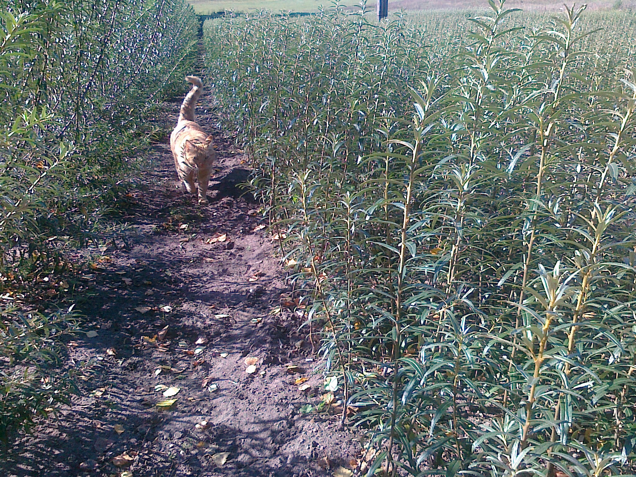 Sea buckthorn inspector.