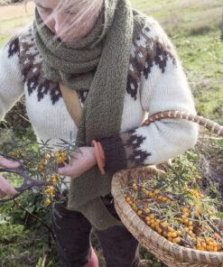 Harvesting Sea buckthorn berries in Quebec